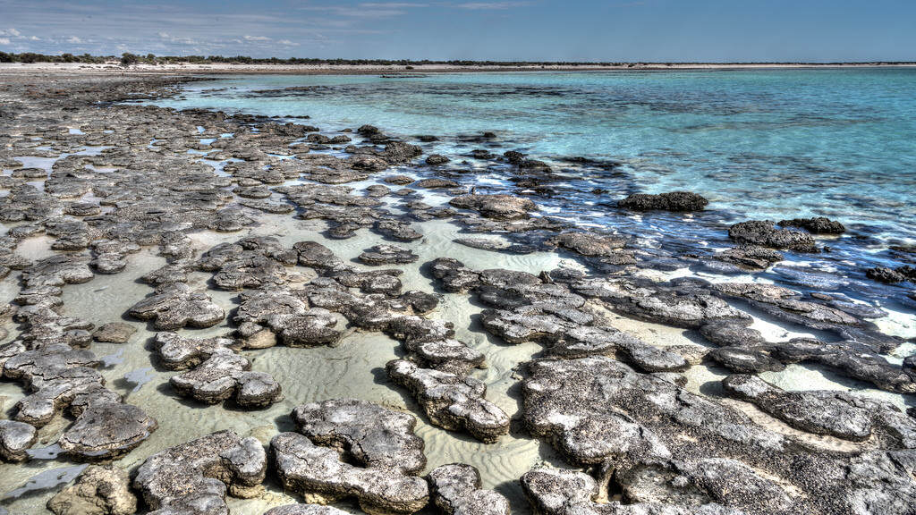 stromatolites in crystal clear water near Hamelin Pool